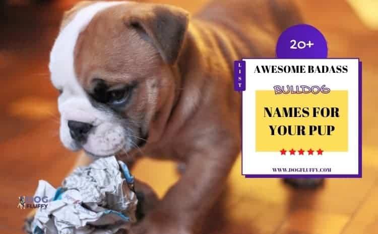 Badass Bulldog Names List