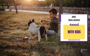 Are Bulldogs Good With Kids? Featured Image