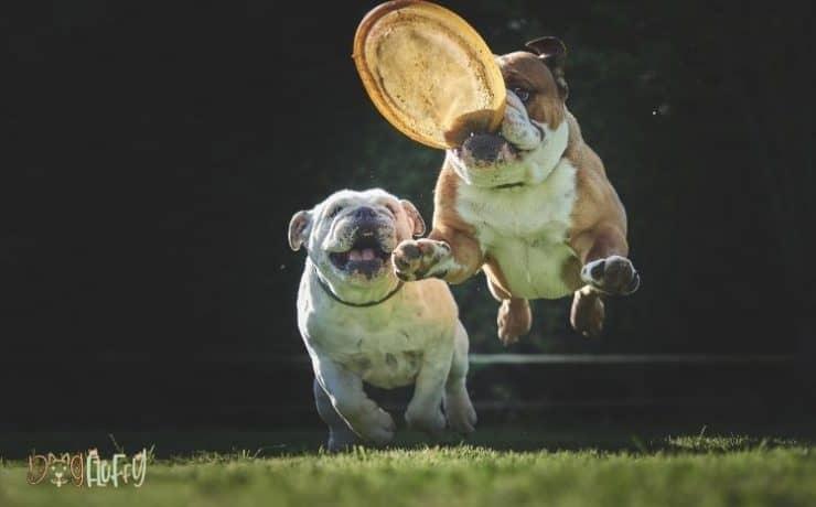 Are Bulldogs Hard To Train