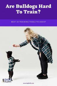Are Bulldogs Hard To Train - PInterest Website Image