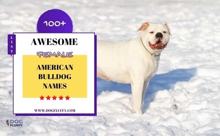 Awesome Female American Bulldog Names