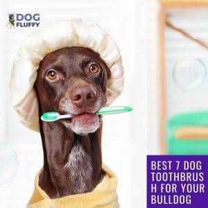 Best 7 Dog Toothbrush For Your Bulldog Social Share Website