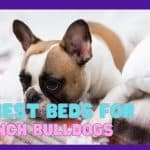 10 Best Beds For French Bulldogs - Top Cozy & Comfortable Bed