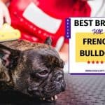 French Bulldog Brush: 11 Picks For Best Brush For French Bulldogs