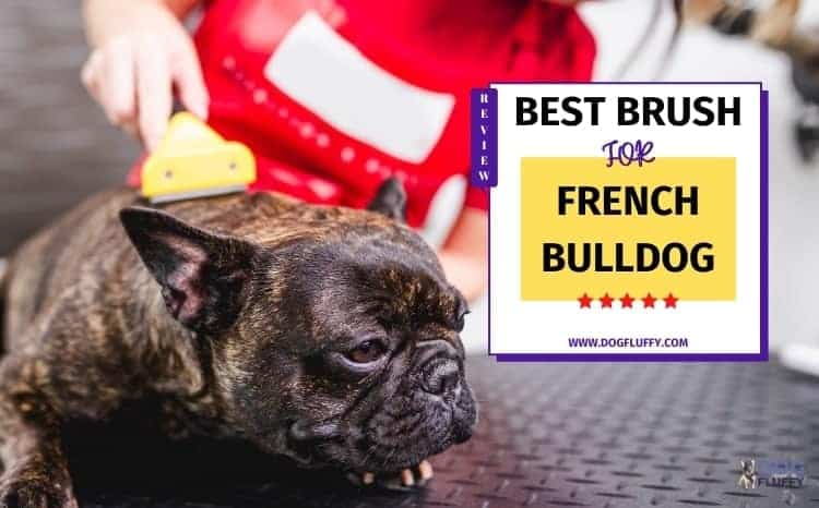 Best Brush For French Bulldogs Featured Image