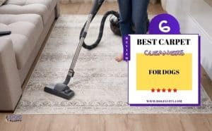 Carpet Cleaners for Dogs - Featured Image