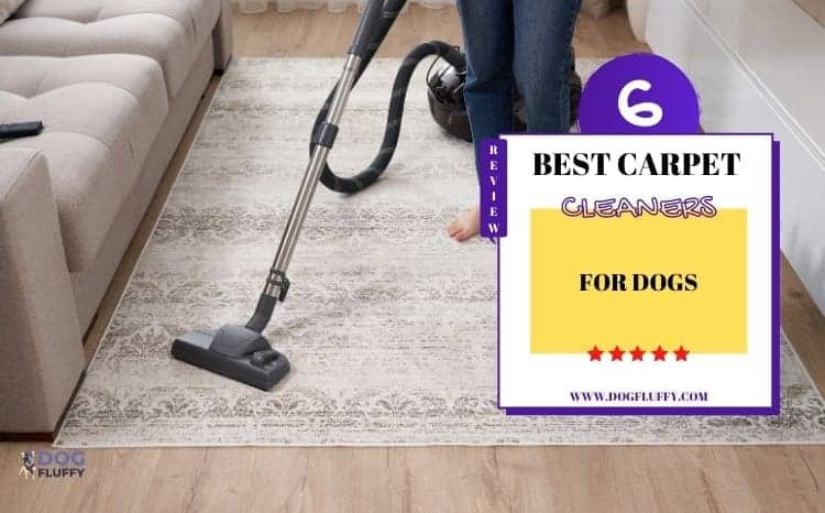 Carpet Cleaners for Dogs