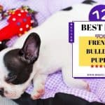12 Best Dog Bed For French Bulldog Puppy