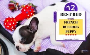 Best Dog Bed For French Bulldog Puppy - Featured Image