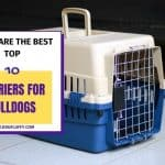 These Are The Best Top 10 Carriers For Bulldogs
