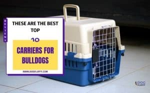 Carriers For Bulldogs - Featured Image