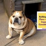 Bulldog House Plans – 7 Most Important Considerations