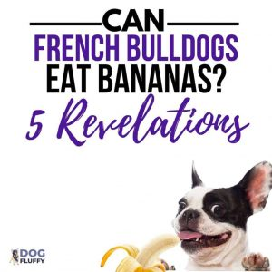 Can French Bulldogs Eat Bananas? – 5 Revelations - IG Image