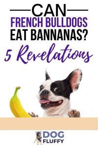 Can French Bulldogs Eat Bananas Pinterest Design