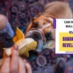 Can French Bulldogs Eat Bananas? – 5 Revelations