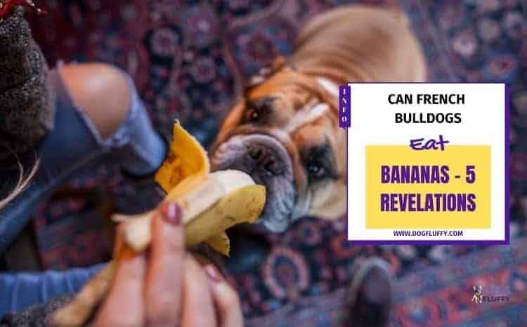 Can French Bulldogs Eat Bananas