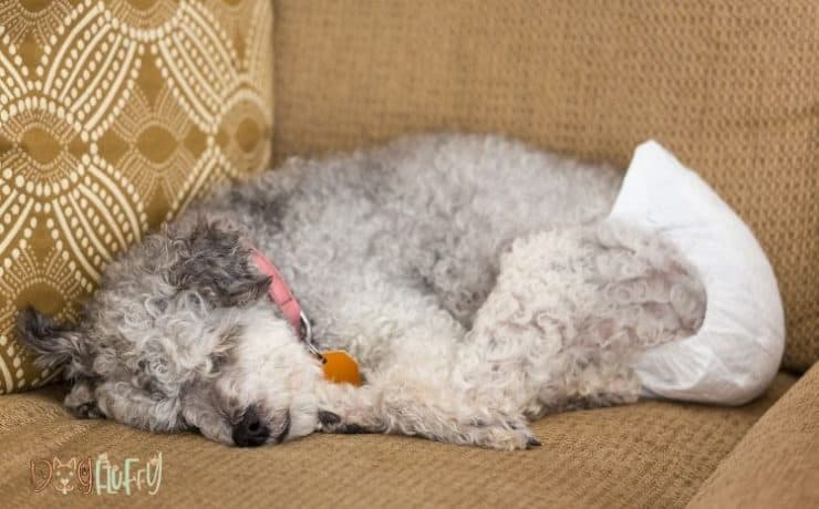 Diapers for Dogs with Incontinence