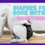 Best 8 Diapers for Dogs with Incontinence