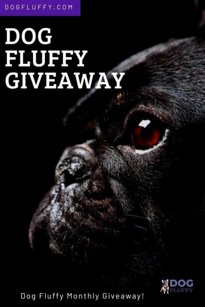 Dog Fluffy Giveaway