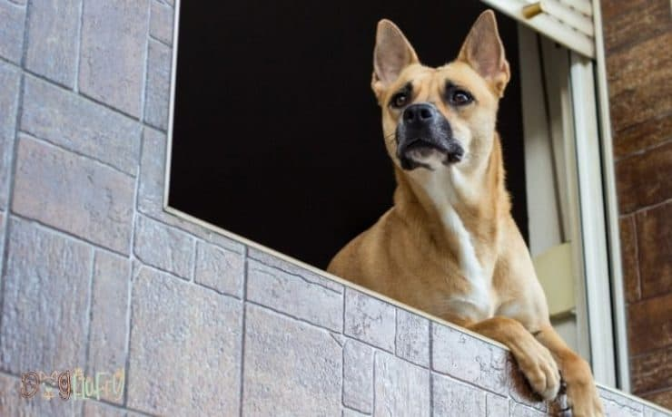 Dog Window Guard