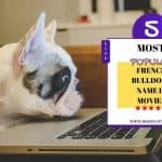 What Are The Most Popular 5 French Bulldogs Name in Movies?