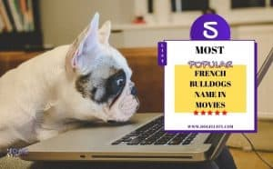 french bulldogs name in movies - Featured image