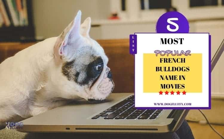 french bulldogs name in movies