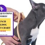 French Bulldog Weight Chart – 7 Best Key Questions, Answered!
