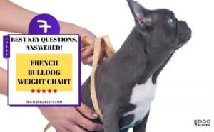 French bulldog weight chart - Featured Image