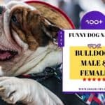 100+ Funny Dog Names for Bulldogs – Male and Female