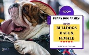 funny dog names for bulldogs featured image