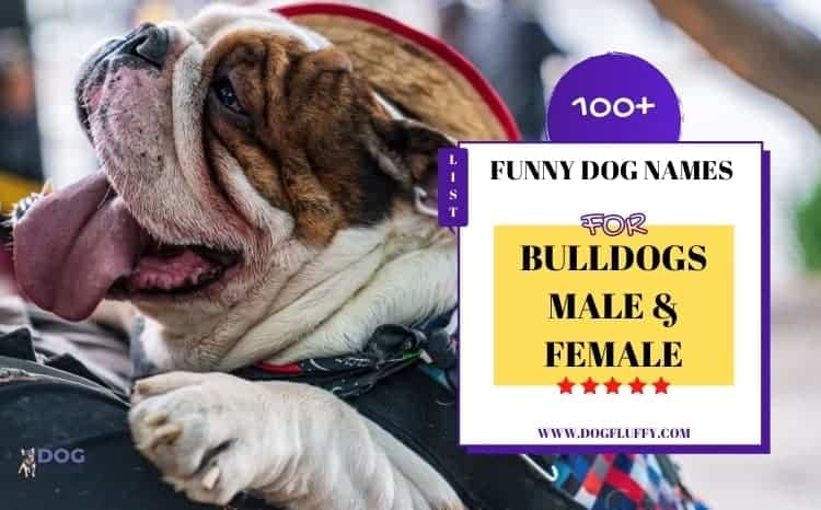 Funny Dog Names for Bulldogs