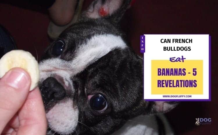 Here is the Answer - Can Bulldogs Eat Bananas