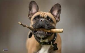 How French Bulldog Came into Existence