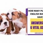 How Many Puppies Do English Bulldogs Have? Best Guide 2020