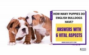 how many puppies do English bulldogs have featured image