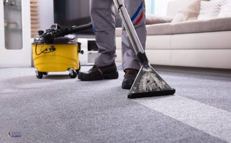 How to Choose The Best Carpet Cleaners for Dogs