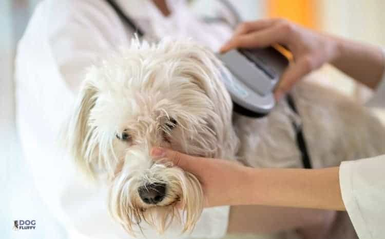 Microchip With GPS Tracker For Dogs