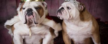 Royal English Bulldog Names