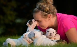 Stop Puppy Biting Fast - Featured Image