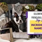 Top 5 Incredible Celebrities French Bulldogs Names