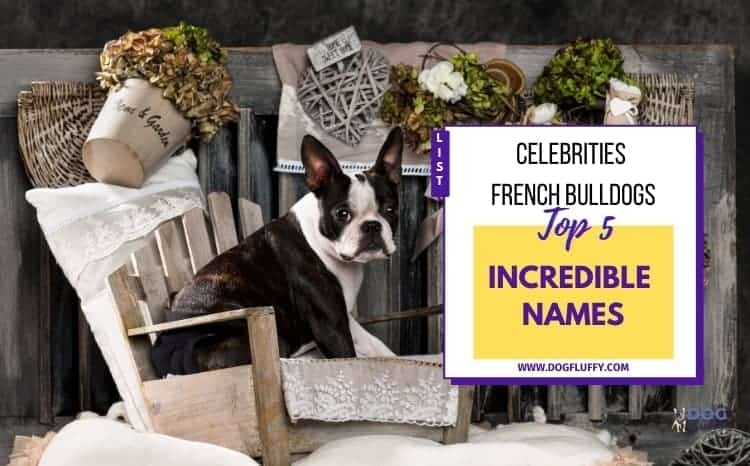 Celebrities French Bulldogs Names