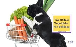 Best Vegetables for bulldogs - featured image