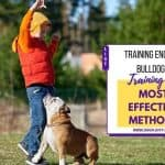 Training English Bulldogs 101 – Most Effective Methods