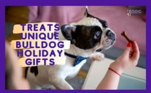 Treats Unique Bulldog Holiday Gifts Featured Image