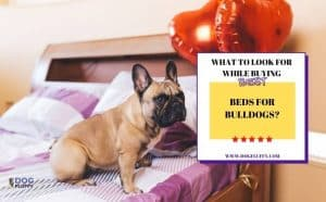 What To Look For While Buying Best Beds For Bulldogs