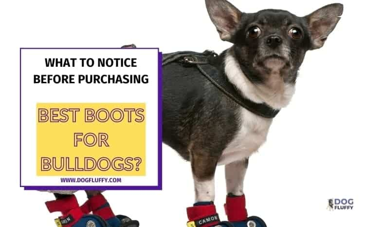 What To Notice Before Purchasing Best Boots For Bulldogs