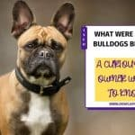 What Were French Bulldogs Bred For? Best Guide 2020