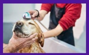 Who Should Be Buying Flea Shampoo for Dogs