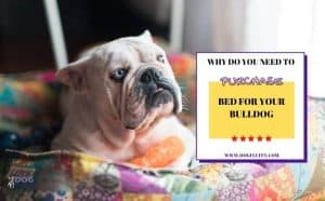 Why Do You Need To Purchase Bed For Your Bulldog